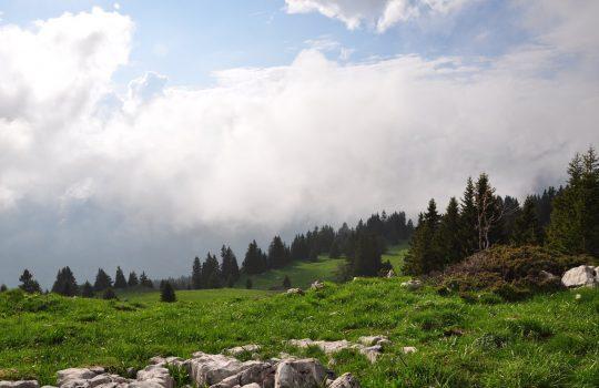 Neutralité carbone : les logiciels SaaS, nouveaux supports de réduction de votre impact CO2
